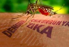 Ở đâu có muỗi truyền bệnh sốt xuất huyết, đều có thể truyền virus Zika