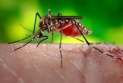 Ca tử vong đầu tiên liên quan đến virus Zika