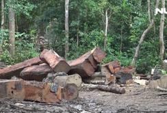 Ồ ạt phá rừng Tây Nguyên