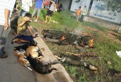 Bản tin NLĐ ngày 28-7: Kinh hoàng nghi phạm trộm chó bị dân đánh, đốt xe
