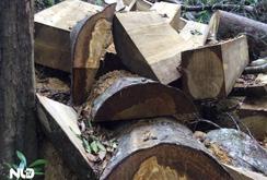 Tan hoang rừng ngàn tuổi ở Đắk Lắk