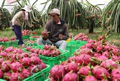 5 năm tới, kì vọng xuất khẩu rau củ quả vượt 10 tỉ USD