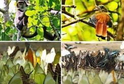 Phóng sự: Khám phá rừng nguyên sinh, Khu cứu hộ linh trưởng Cát Tiên