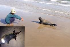 Bản tin NLĐ ngày 6-1-2017: Bình Thuận: Dân hỗ trợ công an tìm kẻ xấu giệt chết hải cẩu