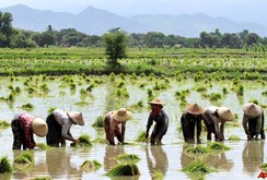 Bản tin đặc biệt cuối tuần 14-1: Myanmar - đối thủ cạnh tranh xuất khẩu gạo với Việt Nam