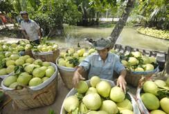Chuyên đề: Rau quả có thể vượt lúa gạo trở thành ngành hàng chủ lực xuất khẩu
