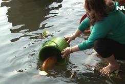 Ghi nhanh: Người dân thả cá chép tiễn ông Táo về trời