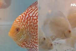 200 hồ cá cảnh cực đẹp tại Ngày hội cá cảnh TP HCM lần 3