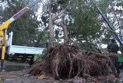Ghi nhanh: Cần Giờ nhà tốc mái, cây xanh bật gốc trong bão số 9