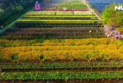 """Ghi nhanh: Ngất ngây với """"vườn hoa Đà Lạt"""" ven sông Sài Gòn"""