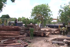 Triệt phá đường dây vận chuyển gỗ qua đồn biên phòng