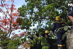 Nghẹt thở giải cứu cô gái ngáo đá leo ngọn cây