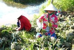 Thúc đẩy xuất khẩu nông sản chính ngạch sang Trung Quốc
