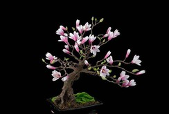 15 chậu bonsai mini siêu đẹp trang trí nhà dịp Tết