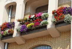 """""""Ngất lịm"""" với những ban công rực rỡ sắc hoa mùa hè"""