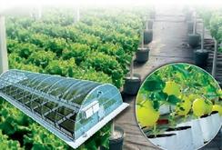 Nâng tầm thương hiệu nông sản Việt bằng ứng dụng công nghệ cao