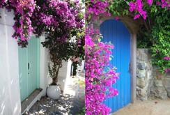 """""""Chết lịm"""" trước những ngôi nhà cổng hoa giấy đẹp tuyệt"""