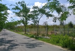 Bỏ hơn 600 triệu mua miếng đất chỉ có thể trồng rau