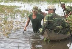 Quân đội giúp dân thu hoạch lúa chạy lũ