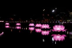 Ghi nhanh: Chiêm ngưỡng 7 đoá sen khổng lồ lung linh trên kênh Nhiêu Lộc