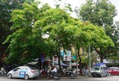 Hà Nội lên kế hoạch chặt hạ, di dời gần 160 cây xanh