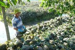 Hậu Giang cần xây dựng chuỗi giá trị nông sản định hướng thị trường logistics?