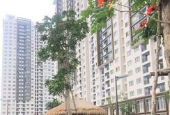 Thông tin về sự cố cháy tại Block B3 - Chung cư The Park Residence