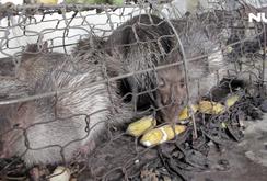 Hàng chục thú rừng chờ chết trong kho hải quan