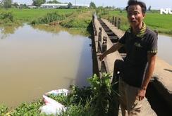Giữa mùa dịch tả heo châu Phi: Xác heo vứt ngập các kênh