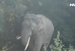 Ghi nhanh: Đàn voi rừng ở Đồng Nai phá hoại mùa màng của dân
