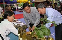 Kỳ vọng sâm Việt vươn ra thế giới