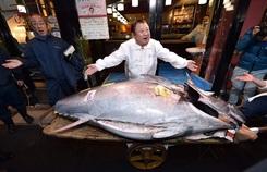 Lý do cá ngừ đắt đến 3 triệu USD