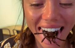 Quán phục vụ món nhện tarantula và côn trùng