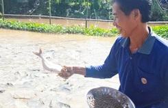 Ngắm đàn cá tự nhiên hàng ngàn con kéo đến trước nhà dân 'ăn nhờ ở đậu'.
