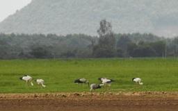Đàn chim quý bất ngờ xuất hiện ở Đồng Nai