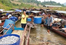 """""""Mỏi tay"""" bắt cá trên sông Đà"""