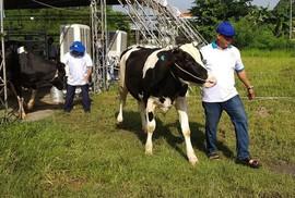 TP HCM chọn bò sữa, heo, tôm, hoa lan... là sản phẩm nông nghiệp chủ lực