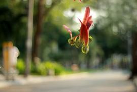 Ngắm hoa, da diết nhớ người