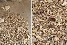 Sửng sốt phát hiện 1.000 răng người bị chôn trong một bức tường
