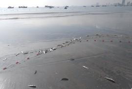 """Ngợp với cảnh đầy ắp cá đối """"áp sát"""" bờ biển Đà Nẵng"""