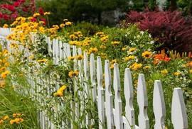 Mê mẩn những hàng rào tuyệt đẹp bằng hoa