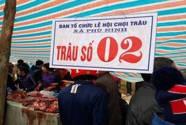 Bộ Văn hoá yêu cầu không giết trâu bán thịt tại Hội chọi trâu