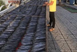 Giáp Tết, người nuôi cá kèo lao đao