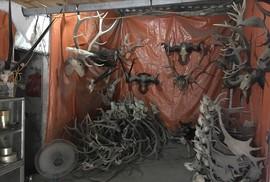 Vào hang ổ đường dây tàn sát thú hoang
