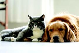 Mèo đến thì khó, chó đến thì giàu