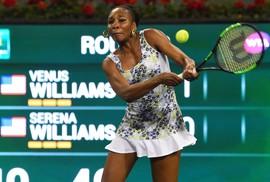 Halep và Venus Williams thẳng tiến vào tứ kết