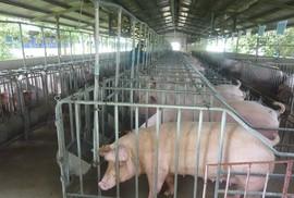 Chăn nuôi vẫn khó tứ bề
