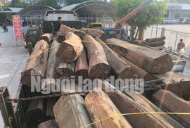Bắt giữ xe đầu kéo chở gỗ căm xe với khối lượng lớn