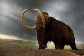 Tái sinh voi ma mút không ngà để cứu trái đất