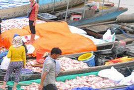 Cá bè trên sông La Ngà lại chết trắng bụng, người nuôi khóc ròng